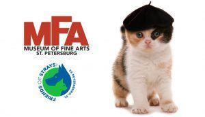 MFA-Friends-of-Strays-kitty
