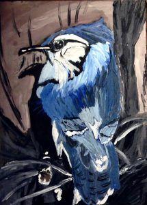 Blue Jay Karen C (2)