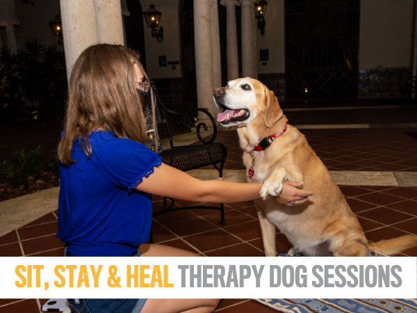 Sit, Stay, Heal Therapy Dog Sessions at the Museum of Fine Arts, St. Petersburg