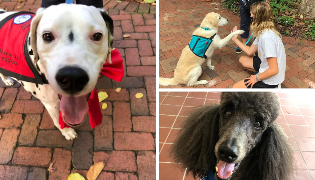 Therapy Dogs at the MFA: Sit, Stay, Heal